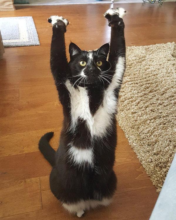Кот показывает лапой