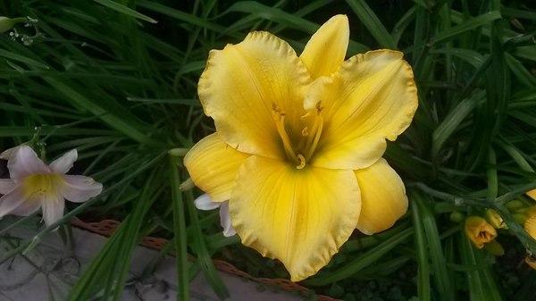 Красота природы моё, цветы, красота, фото на тапок, Фото
