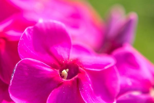 Немного цвета. Цветы, Макро, Лето, Фото, Длиннопост