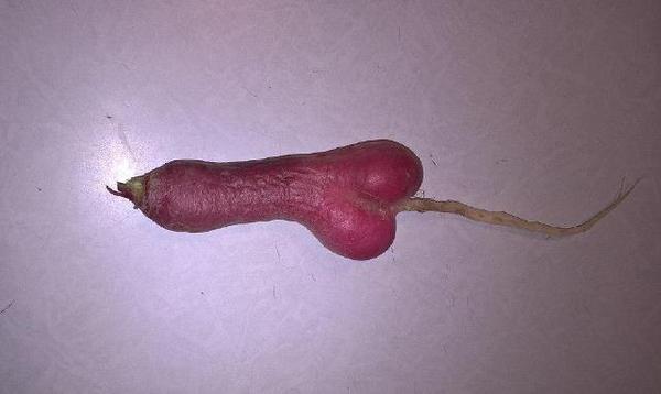 X*евый урожай редиса в этом году редиска, моё, овощи