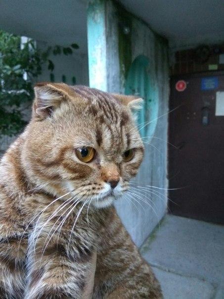 Найден вислоухий котейка, г.Алматы Найден кот, Алматы, Потеряшка, Помощь, Помощь животным, Длиннопост, Кот, Найдено