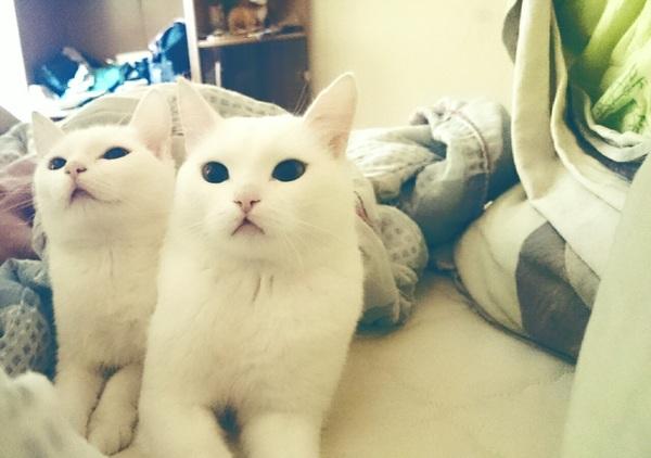 Знакомьтесь - Плотва Фенрир, Кот, Клон кота