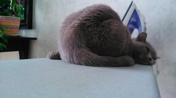 Котиков вам в ленту Кот, Сон, Поза, Бессмысленность поста