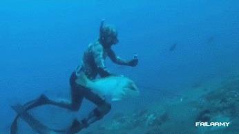 Когда подводная охота перестала быть забавой