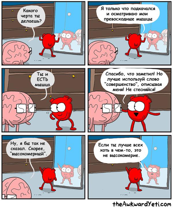 Сердечная мышца (плюс к уверенности)