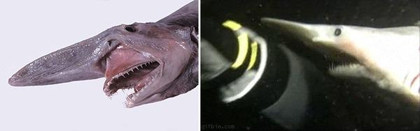 Существа, про которых можно снимать фильмы ужасов Существа, Животные, Рыба, Фильмы ужасов, Крипота, Гифка, Длиннопост