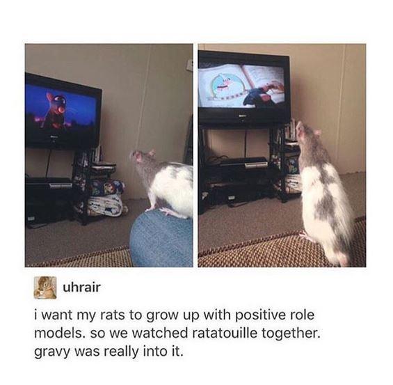 Достойный пример Крыса, Рататуй