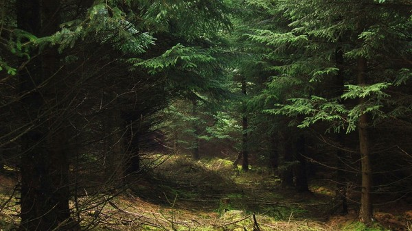 Лесная сказка лес, самопознание, разобраться в себе, поход, бугуртпост, длиннопост