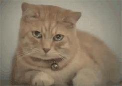 Котик на прощанье Кот, Банк, Долой долги, Кредит, Банковская карта, Банковские коты, Тинькофф, Тинькофф банк, Гифка