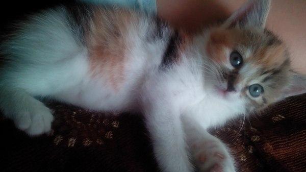 Теперь и у меня есть кошка) кот, Муха