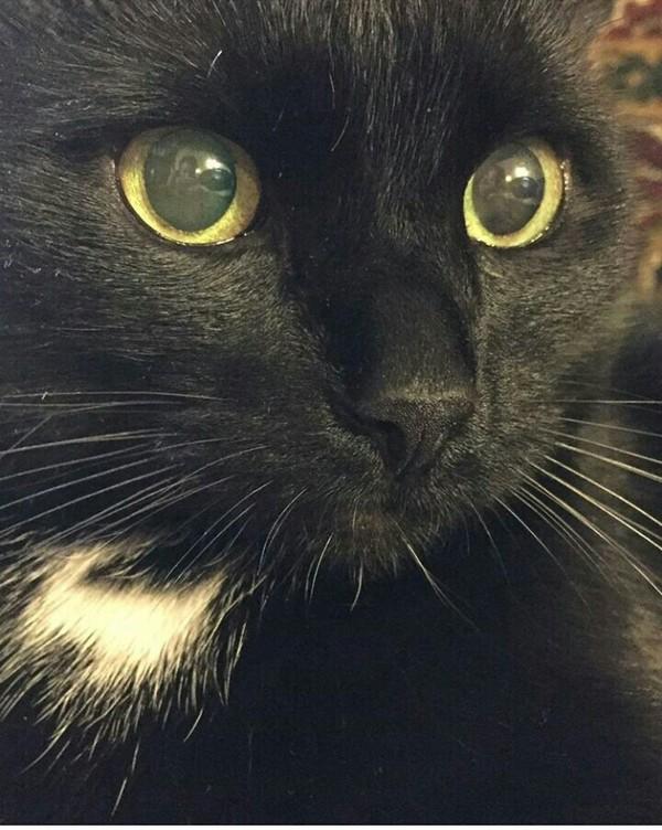 Сообщество черных котеек черный кот, очень черный кот