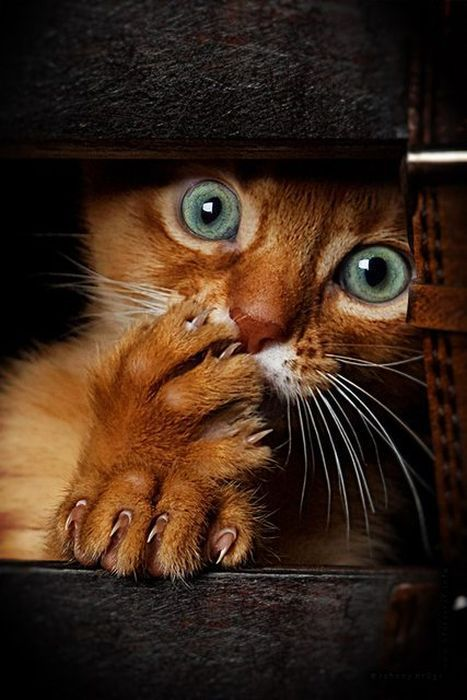 Про котят кот, весна, возьмите котенка
