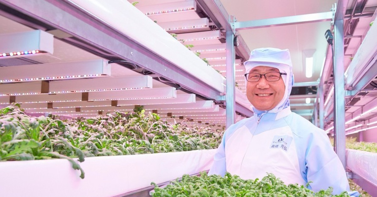 the benefits of vertical farming Benefits imparted by vertical farming, such as low water requirement, low transportation cost, and reduced washing and processing of produce are the growth drivers.