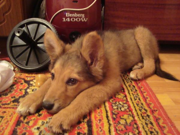 Найдена собачка Собака, Находка, Лига добра, В добрые руки