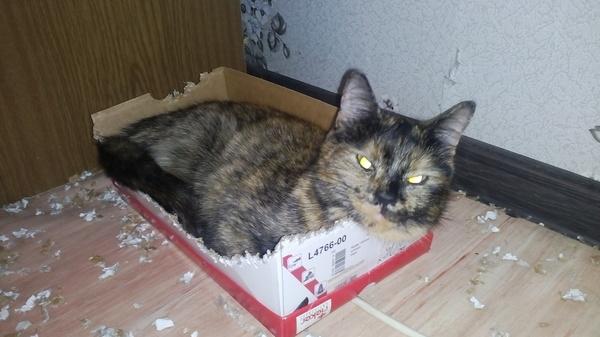 Тайна жестоко загрызенной коробки раскрыта! Кот, Коробка, Коробка и кот