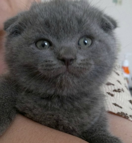 Помогите котику Кот, Ветеринар, Помощь, Спб!, Санкт-Петербург, Лекарства