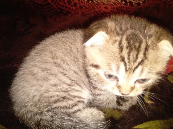 Мой Ордынский кот Кот, Милашка, Орда, Warcraft