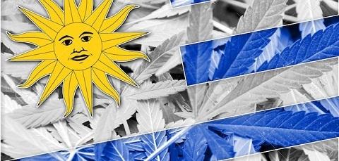 Уругвай: Официальное начало открытой продажи конопли в аптеках Уругвай, Марихуана