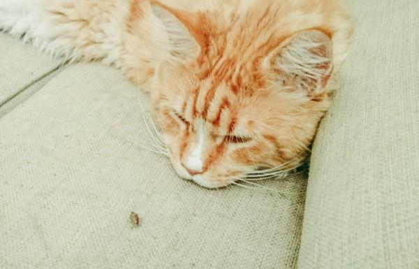 Кот наблюдает за жуком.