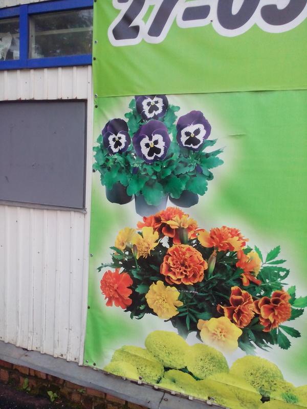 Кажется, эти цветы что-то имеют против меня...