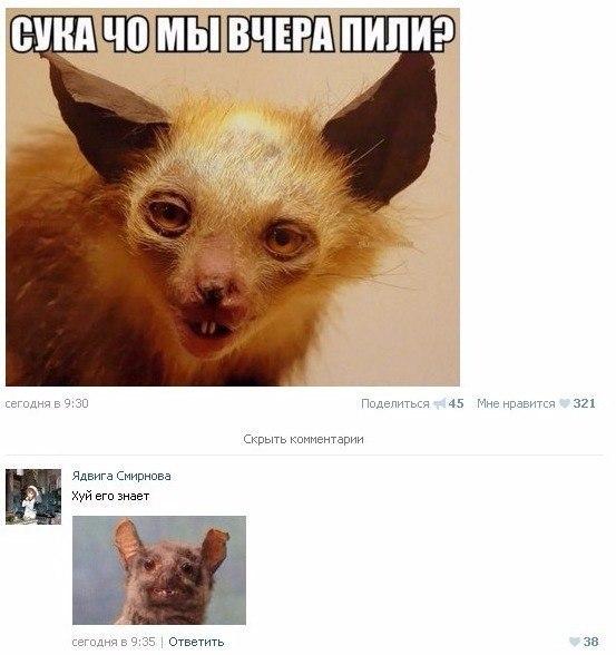 Знакомо? ВКонтакте, Скриншот, Пьянка