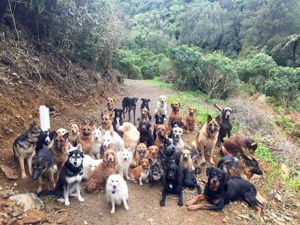 Это я выгуливаю собак или они меня?