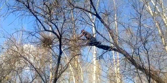 Опиливание деревьев. Дерево, Альпинизм, Яблоня, Безопасность