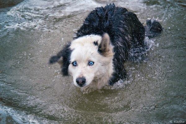 По глазам собаки стало понятно, какая вода летом в горной речке :) Горный Алтай, Река, Холодно
