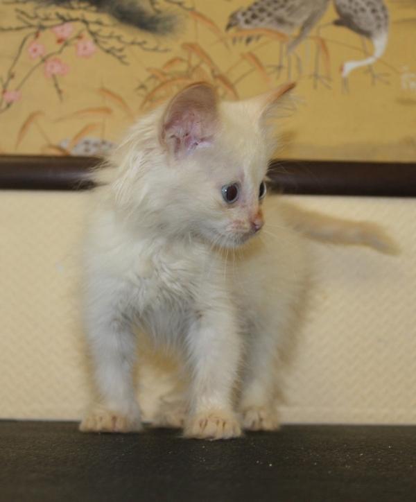 Помогите найти кошечке дом В добрые руки, Ижевск, Помощь, Животные, Кот, Длиннопост