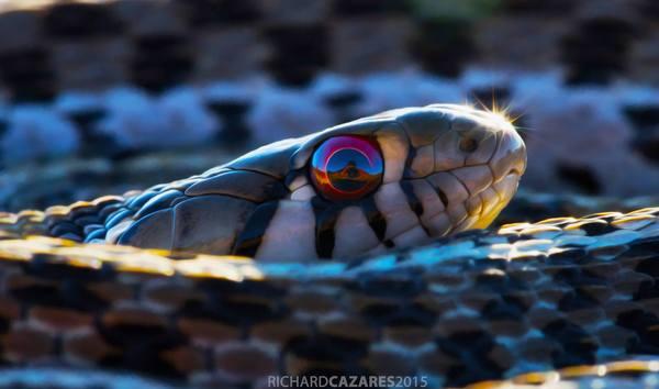 Зеркальные глазки Уж, Змея, Фотограф, Отражение