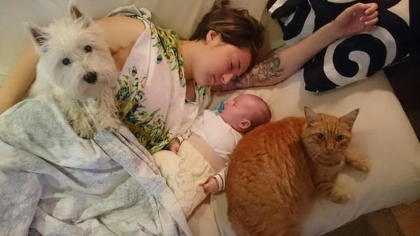 Ох, рано встает охрана Мир, Юмор, Животные, Кот, Собака, Фото, Дети, Милота