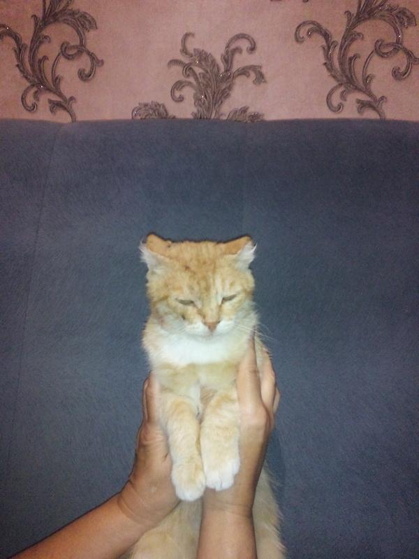 Пропал кот! пропал кот, Энгельс, мелиорация, кот, Лига Добра, Помощь, длиннопост