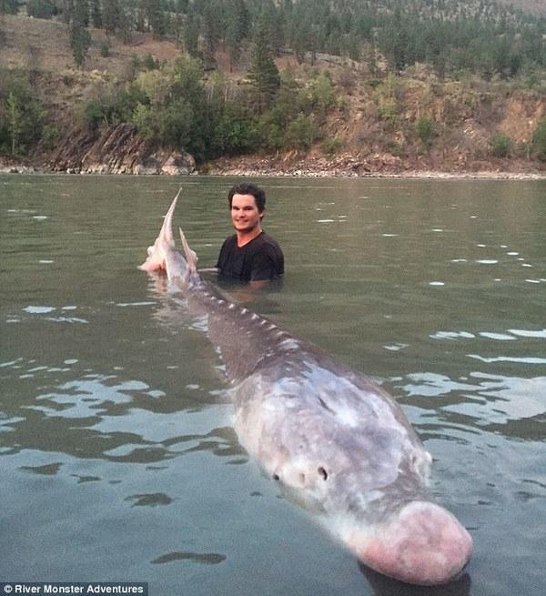 Всего лишь небольшой белый осетр, пойманный 19-летним рыбаком Фото, Длиннопост, Интересное, Рыбалка, Осетр, Рекорд