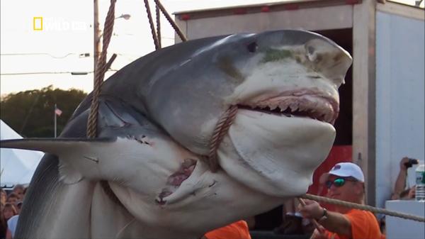 Тот самый момент, когда страшно доставать улов Рыбалка, Улов, Длиннопост
