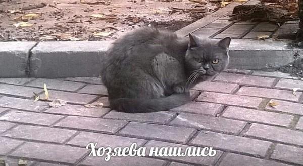 Пристройство Кот, Помощь, Моё