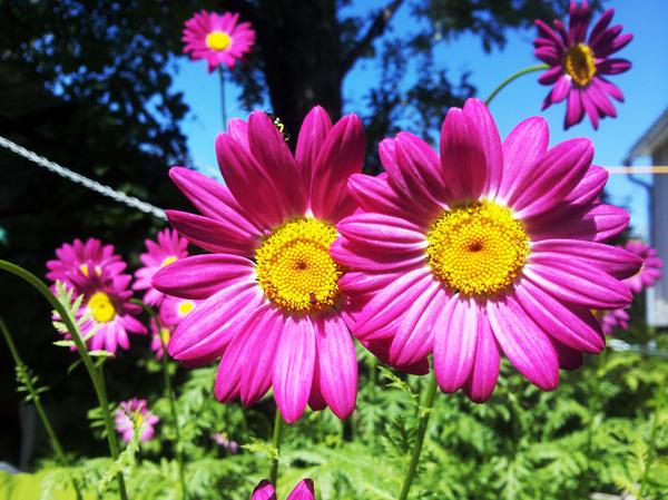 Немного летних фото Фотография, Цветы, Длиннопост