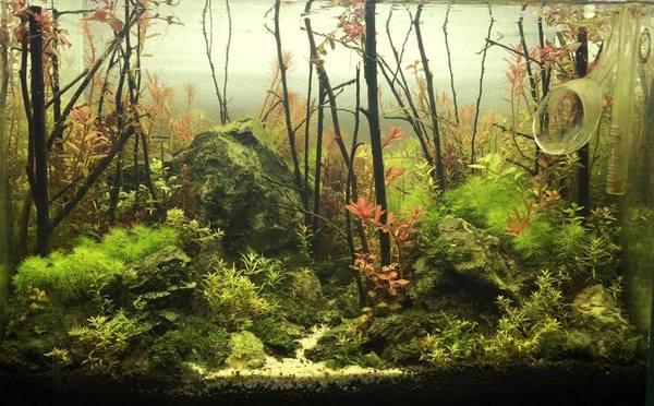 Создание акваскейпа Аквариумистика, Акваскейп, Аквариум, Фото, Длиннопост