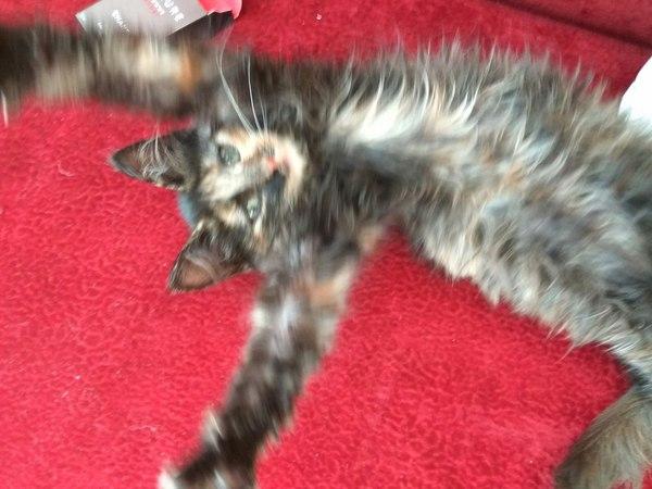Помогите найти жилье бездомному котенку Помощь, Кот, Бездомный котик, Некрасовка, В добрые руки
