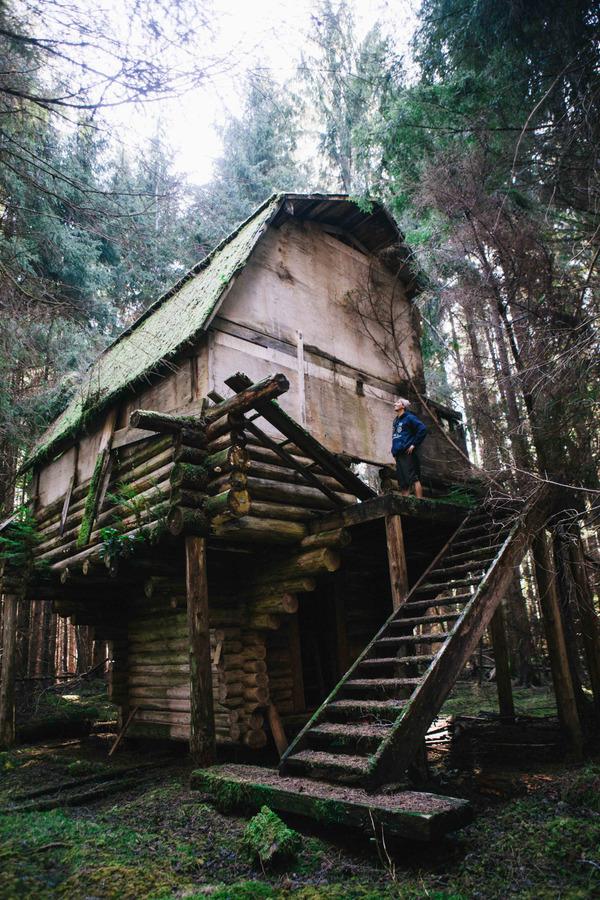 Когда решил отстроить в лесу дом ...