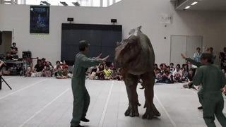 Не бойтесь, он не кусается. Только понюхает... Динозавры, Костюм, Косплей, t-Rex, Шоу, Азиаты, Дети, Гифка