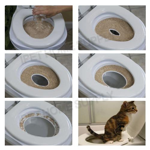 Картинки кота в унитаза