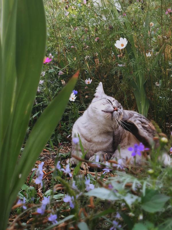 Летняя Кот, Цветы, Лето, Трава, Фото