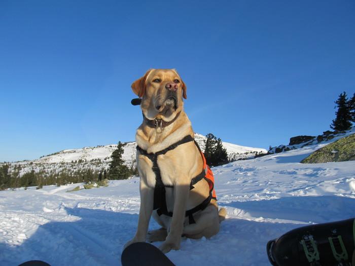 Немного фоток с прогулки. Прогулка, Зима, Собака, Лабрадор, Природа, Длиннопост