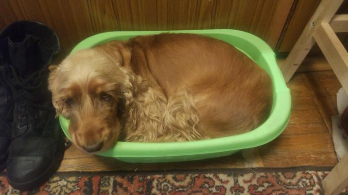 Собака тоже может быть жидкостью Домашние животные, Собака, Коты это жидкость