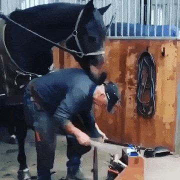 Лошадкин мастер педикюра