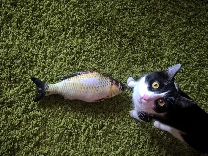 Рыбка для кота Кот, Игрушка для кота