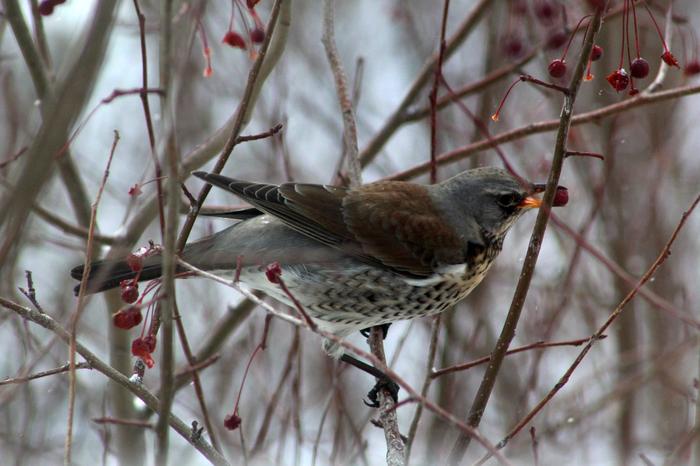 Зимние гости Птицы, Начинающий фотограф, Длиннопост