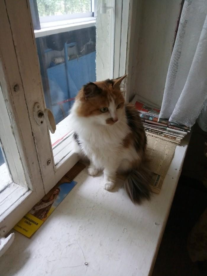 Кошка ищет хозяев. Кот, Без рейтинга, Приют, Длиннопост
