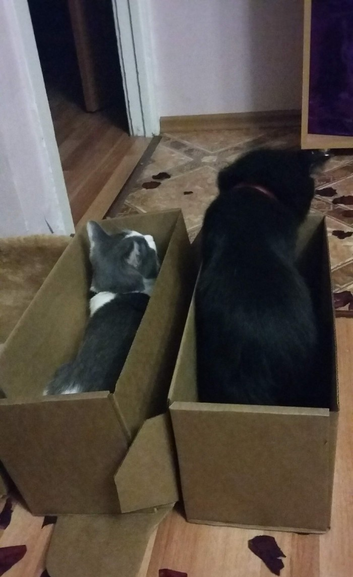 Кошачьи ловушки