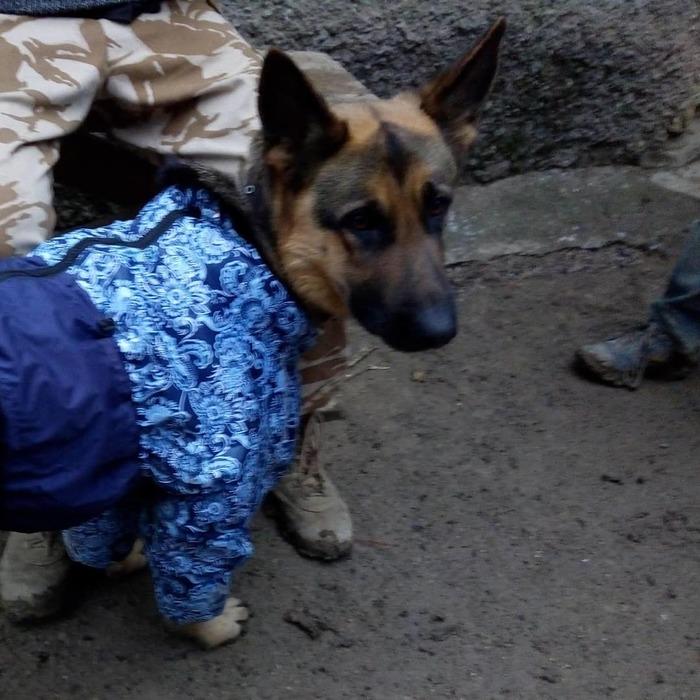 Новая униформа Немецкая овчарка, Собака, Одежда